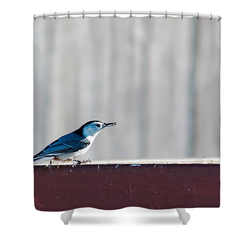 Heron Haven Shower Curtain featuring the photograph Got It by Edward Peterson