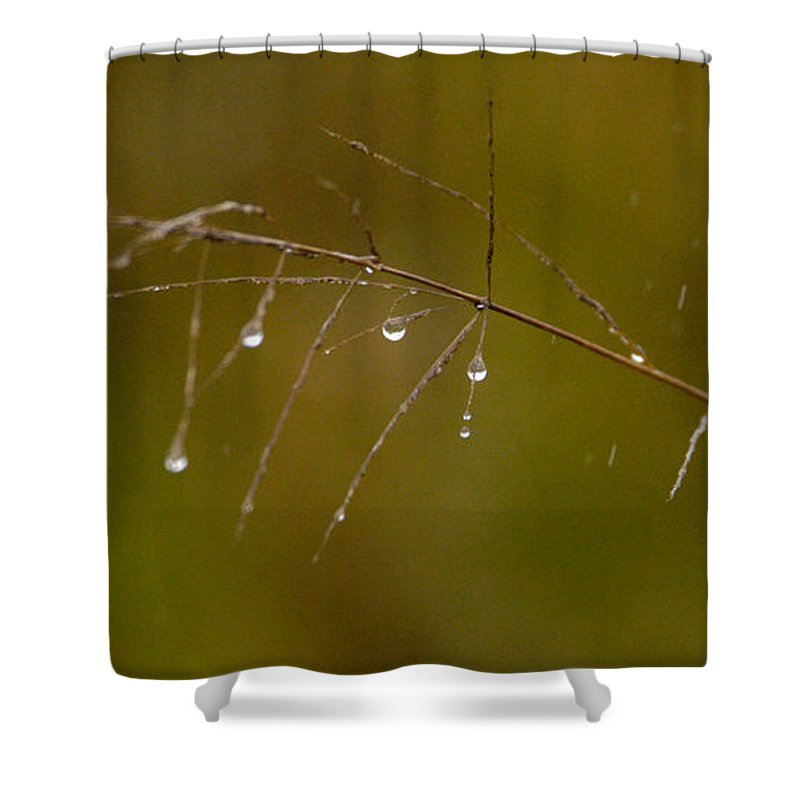 Africa Shower Curtain featuring the photograph Grassdrops by Alistair Lyne