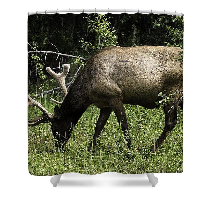 Elk Shower Curtain featuring the photograph Grassland Grazing by Jo-Anne Gazo-McKim