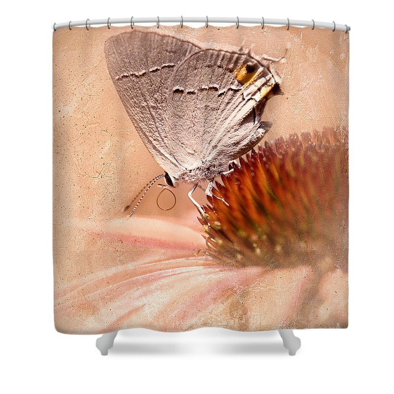 Gray Hairstreak Butterfly Shower Curtain featuring the photograph Gray Hairstreak Butterfly by Betty LaRue