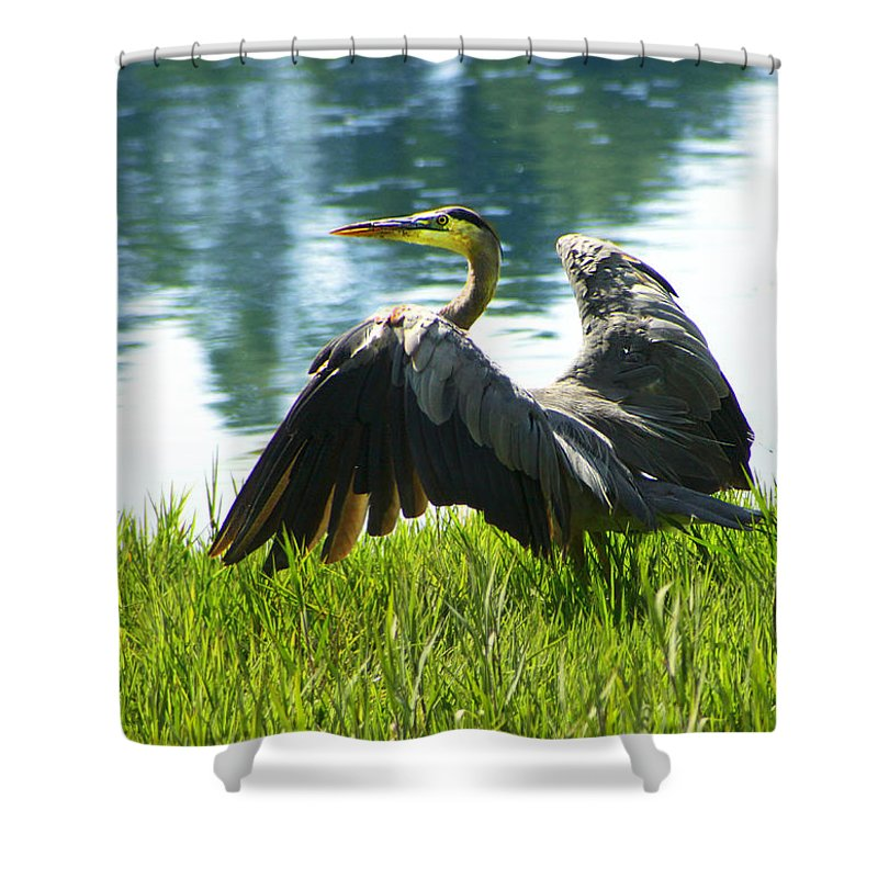 Heron Shower Curtain featuring the photograph Great Blue Heron by Diana Haronis
