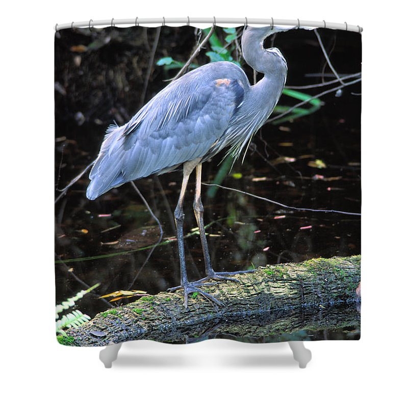 Light Shower Curtain featuring the photograph Great Blue Heron, Florida by Robert Postma