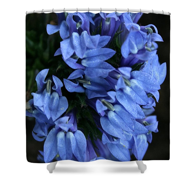 Outdoors Shower Curtain featuring the photograph Great Blue Lobella by Susan Herber