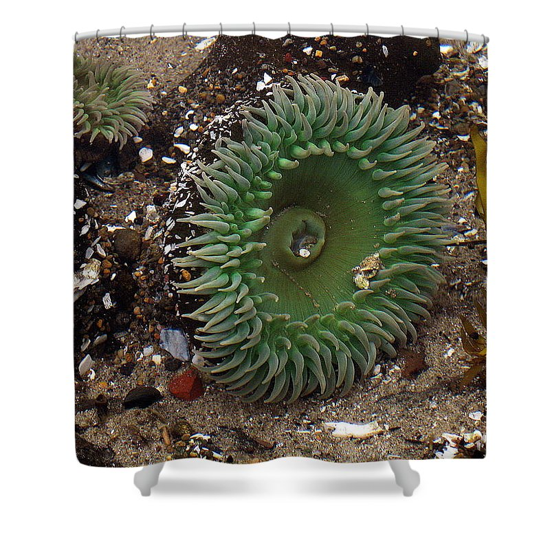 Anemone Shower Curtain featuring the photograph Green Anemone by Linda Hutchins
