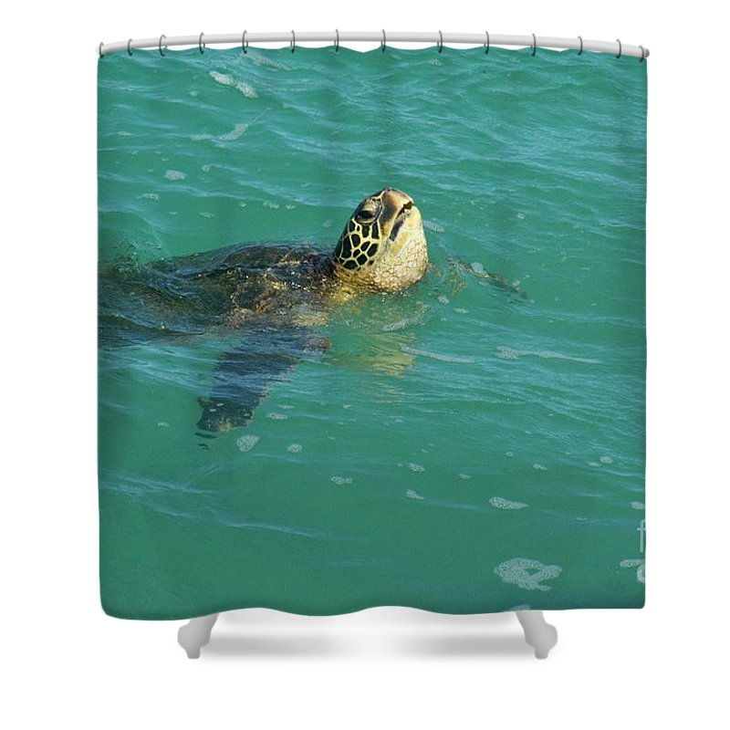 Green Shower Curtain featuring the photograph Green Sea Turtle 4 by Bob Christopher