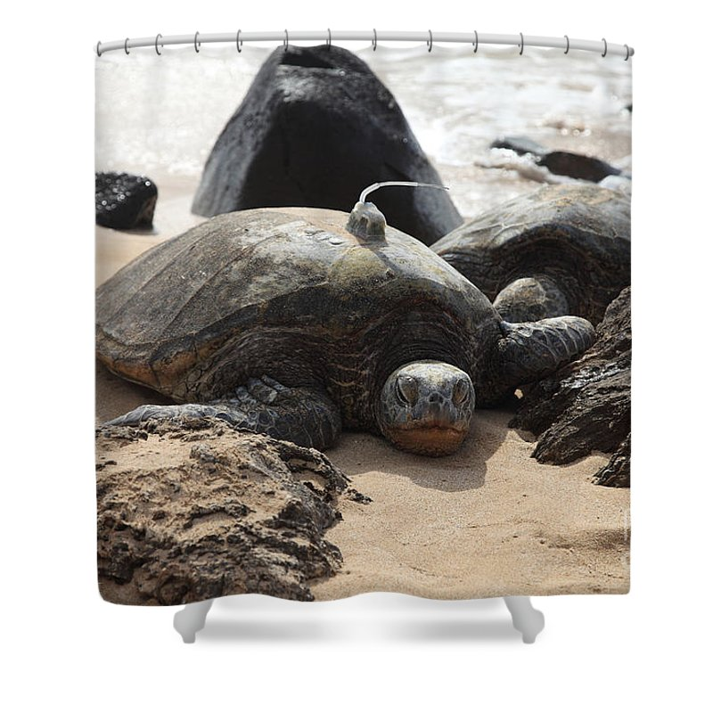 Green Sea Turtle Shower Curtain featuring the photograph Green Sea Turtle With Gps by Ted Kinsman