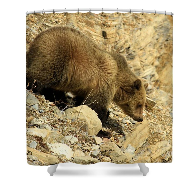 Grizzly Bear Shower Curtain featuring the photograph Grizzly On The Rocks by Adam Jewell