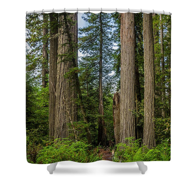 Redwoods Shower Curtain featuring the photograph Group Of Redwoods by Greg Nyquist