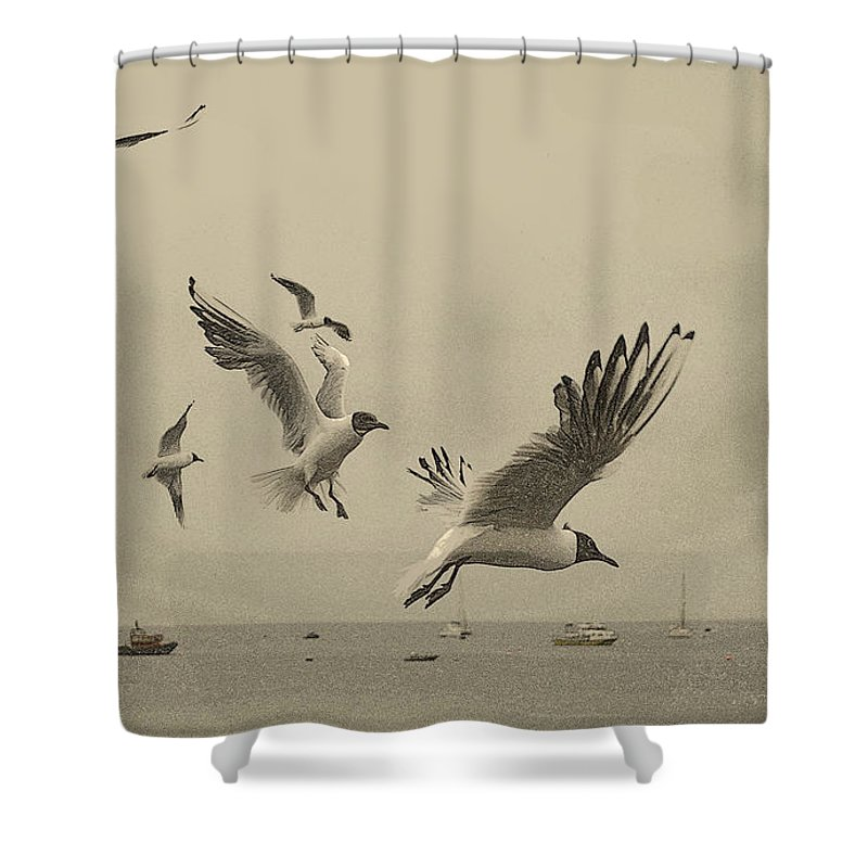 Sea Birds Shower Curtain featuring the photograph Gulls by Linsey Williams