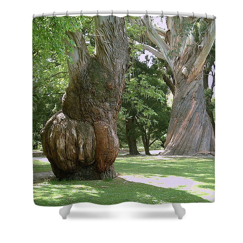 Gum Trees Shower Curtain featuring the photograph Gum Trees by Joyce Woodhouse