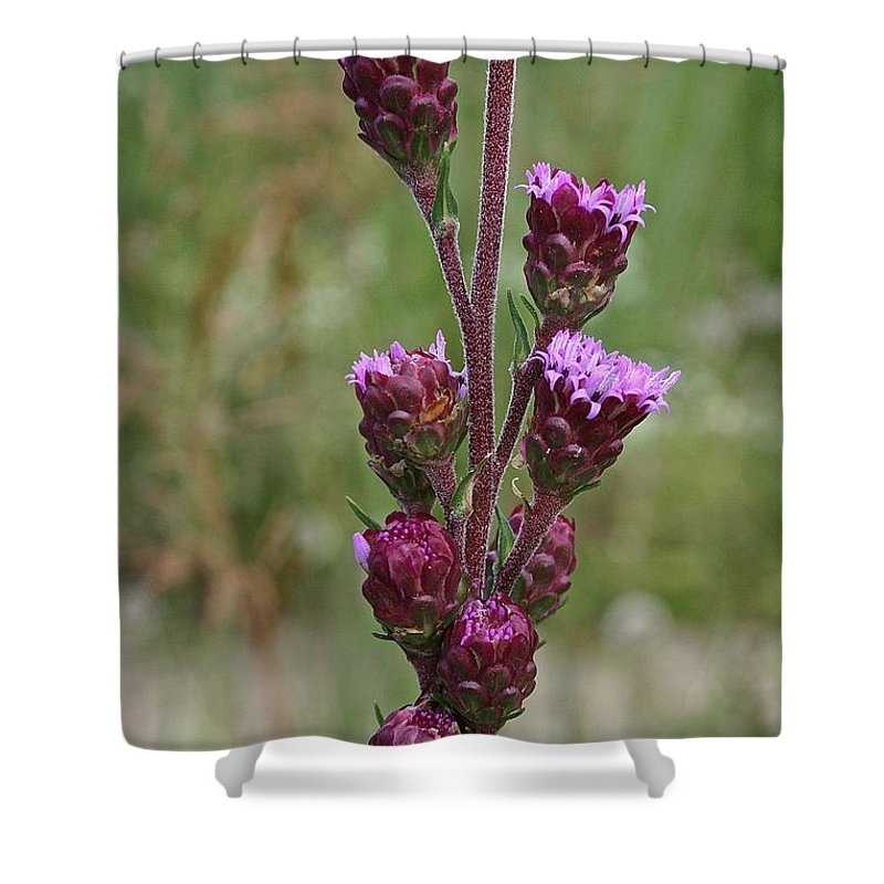 Outdoors Shower Curtain featuring the photograph Harebell Buds by Susan Herber