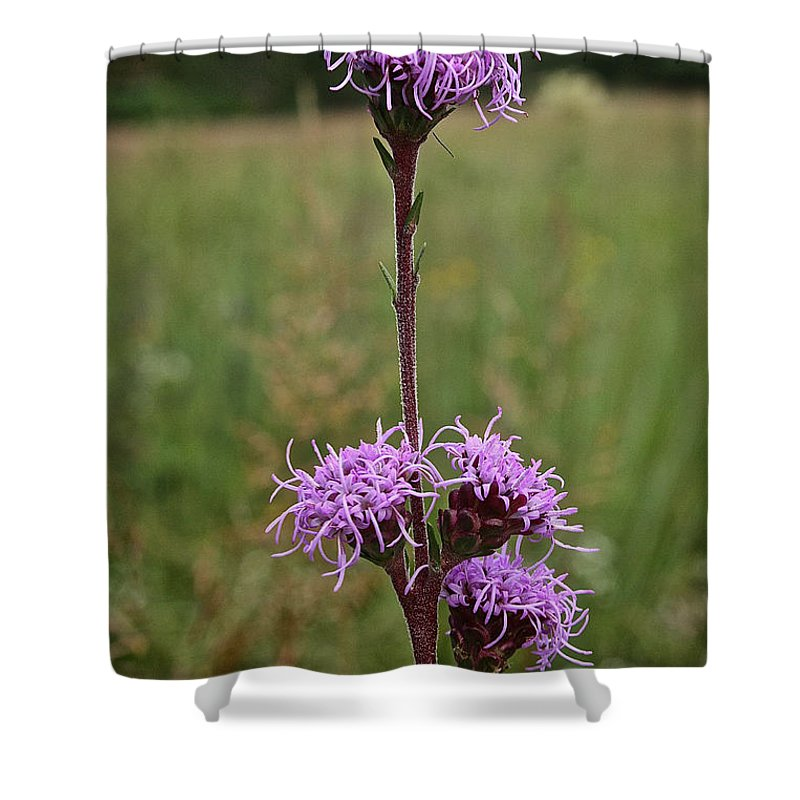 Outdoors Shower Curtain featuring the photograph Harebell by Susan Herber
