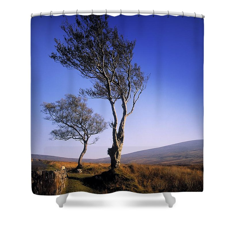 Scenery Shower Curtain featuring the photograph Hawthorn Trees In Sally Gap, County by The Irish Image Collection