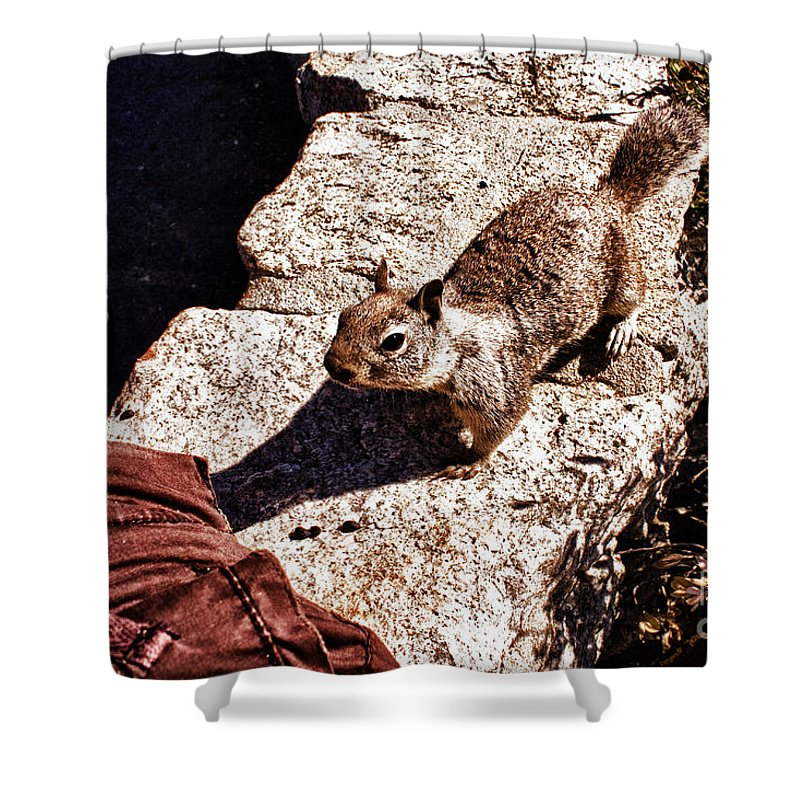 Hdr Shower Curtain featuring the photograph hd 375 hdr - Feed Me 1 by Chris Berry