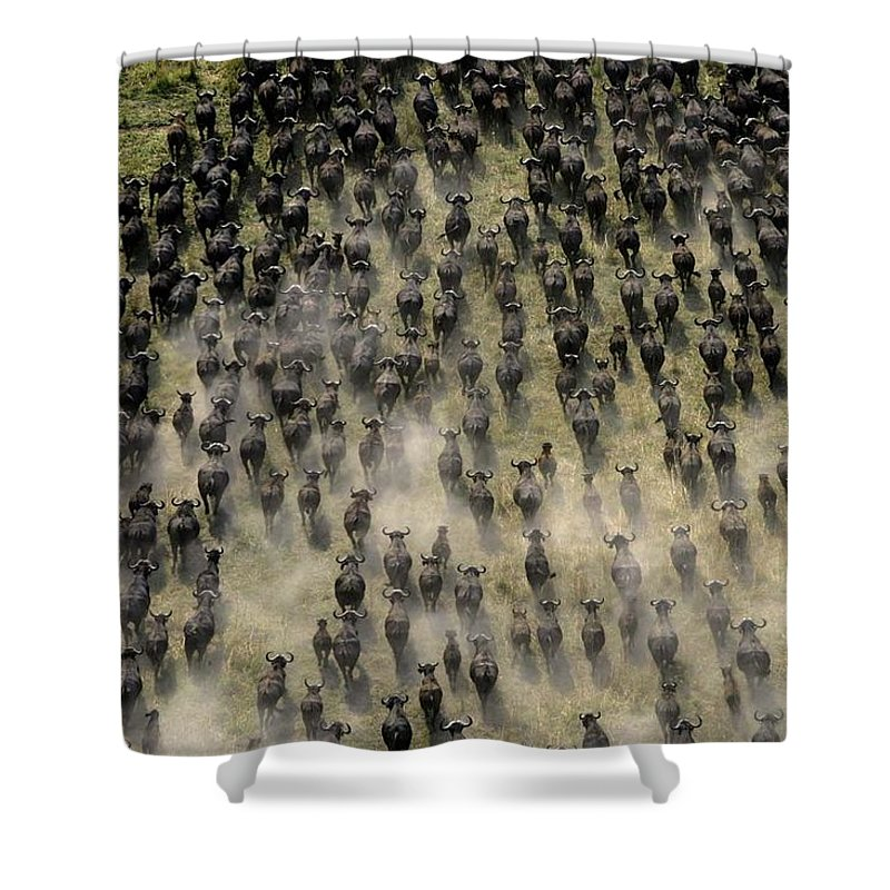 Day Shower Curtain Featuring The Photograph Herd Of Migrating African Buffalo By Beverly Joubert