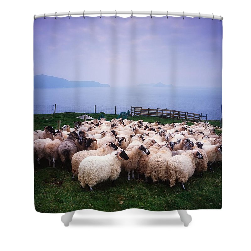 Animals Shower Curtain featuring the photograph Herding Sheep, Inishtooskert, Blasket by The Irish Image Collection