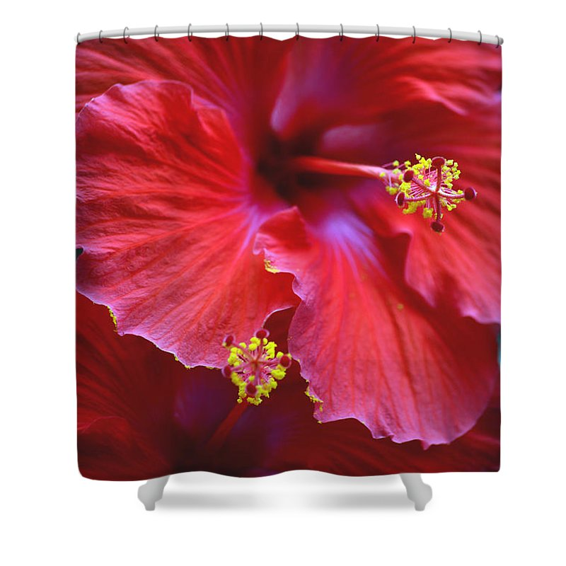 Hibiscus Shower Curtain featuring the photograph Hibiscus Duo by Sandi OReilly