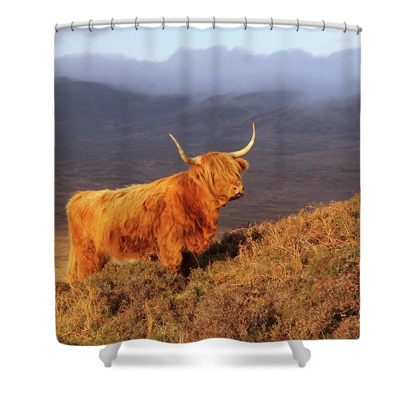 Highland Shower Curtain featuring the photograph Highland Cattle Landscape by Bruce J Robinson