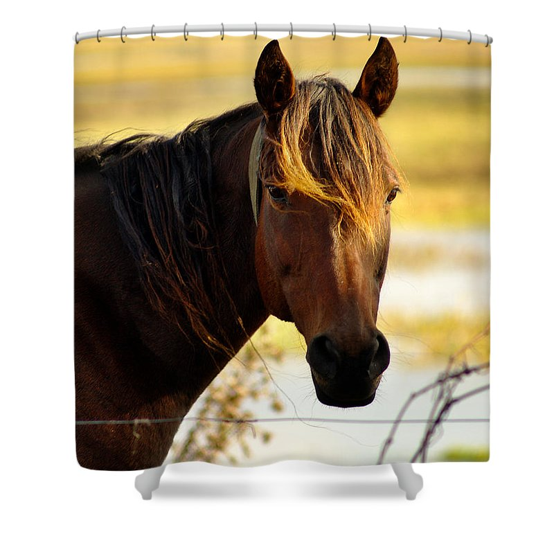 Horse Shower Curtain featuring the photograph Highlights2 by Dennis Comins