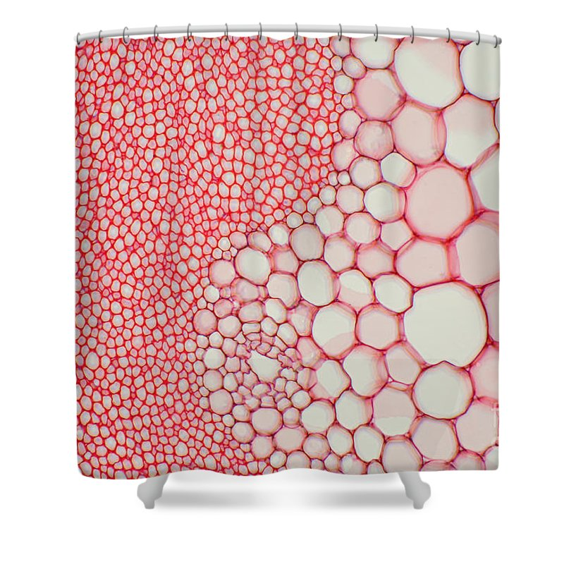 Science Shower Curtain featuring the photograph Hogweed Stem by Ted Kinsman