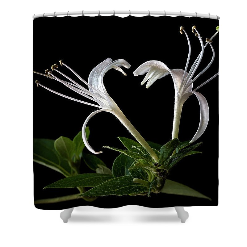 Flower Shower Curtain featuring the photograph Honeysuckle by Endre Balogh