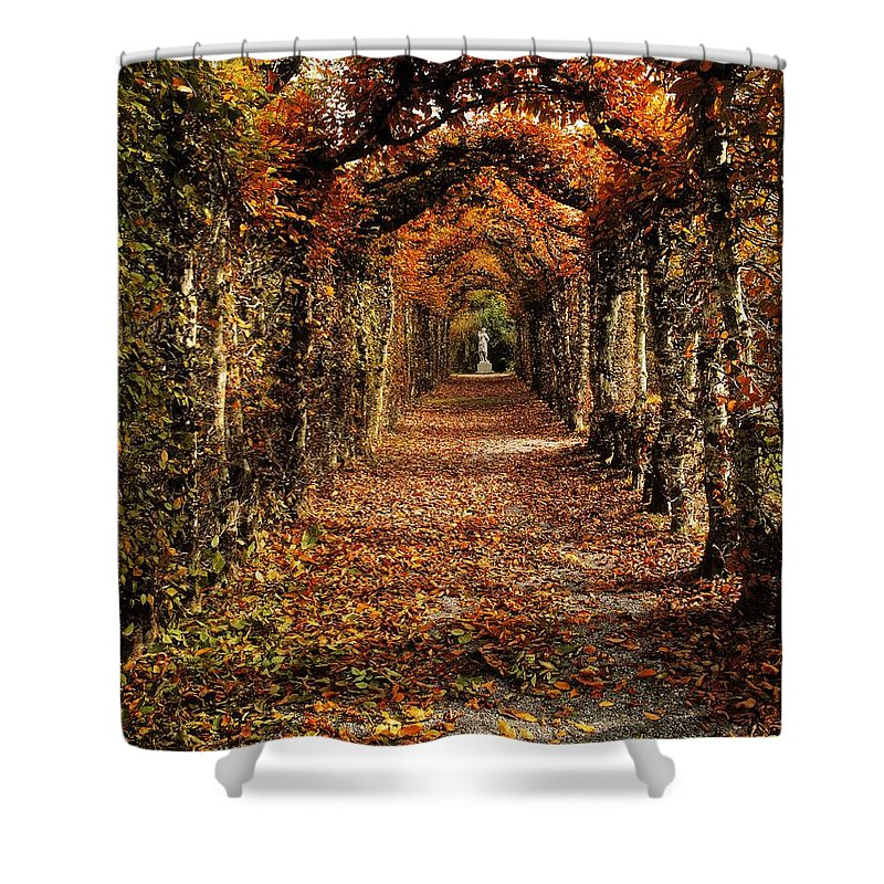Atmosphere Shower Curtain featuring the photograph Hornbeam Alles, Birr Castle, Co Offaly by The Irish Image Collection