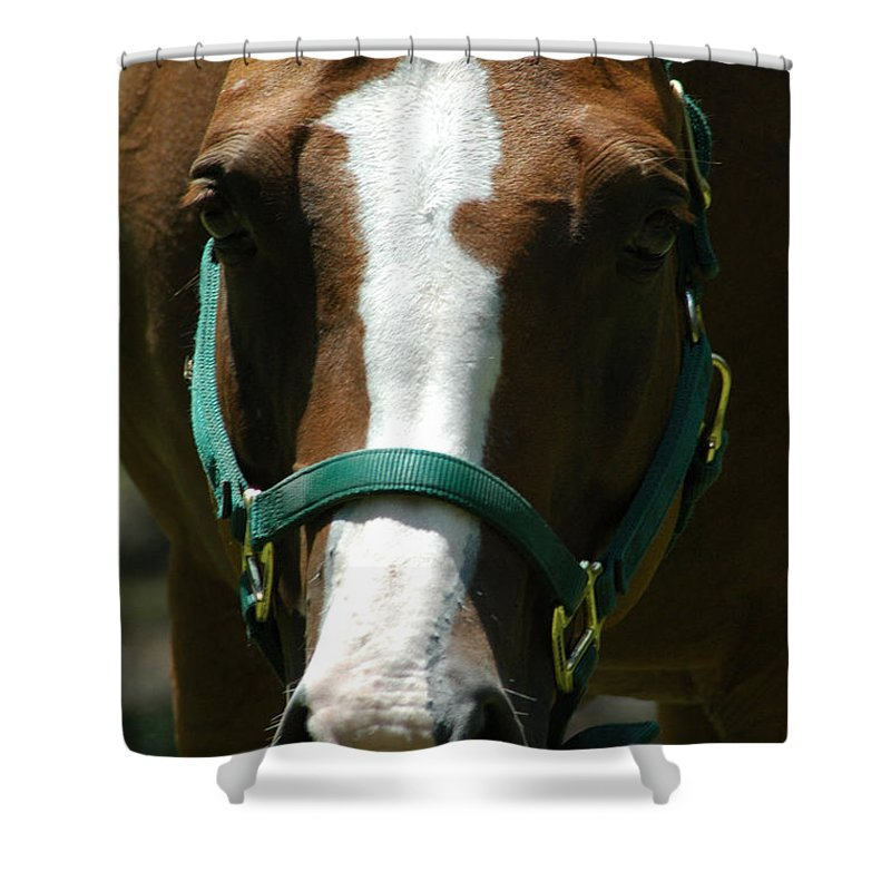 Horse Shower Curtain featuring the photograph Horse Face by David Weeks