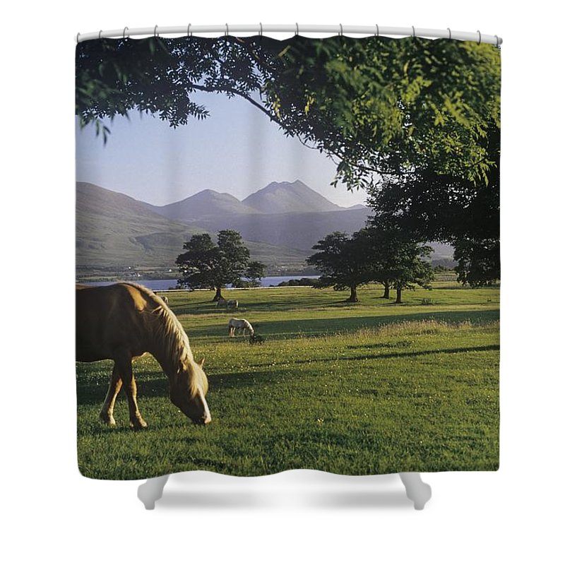Cloud Shower Curtain featuring the photograph Horse Grazing On A Landscape by The Irish Image Collection