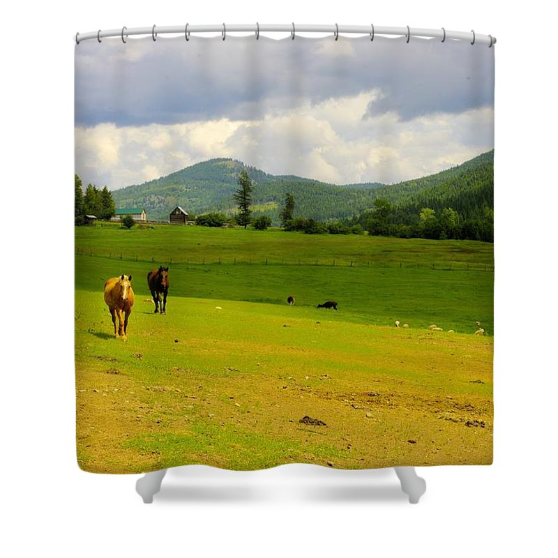 Greenwood Shower Curtain featuring the photograph Horse Heaven by John Greaves
