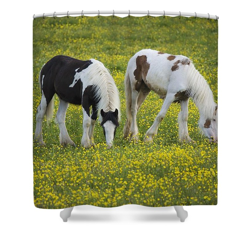Graze Shower Curtain featuring the photograph Horses Grazing, County Tyrone, Ireland by Gareth McCormack