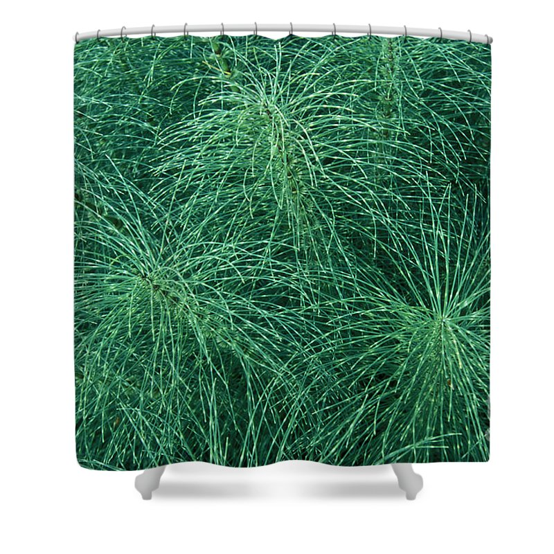 Bronstein Shower Curtain featuring the photograph Horsetail Fern by Sandra Bronstein