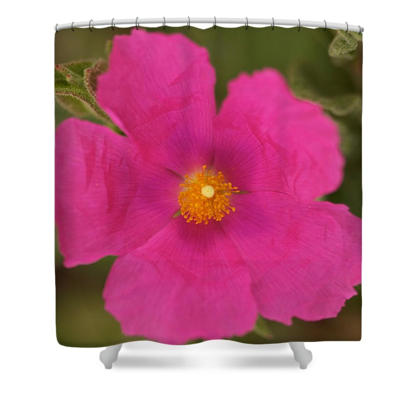 Pink Cosmo Photographs Shower Curtain featuring the photograph Hot Pink by Brooke Roby