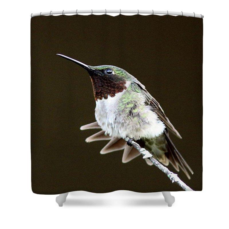 Hummingbird Shower Curtain featuring the photograph Hummingbird - Wide Tail by Travis Truelove