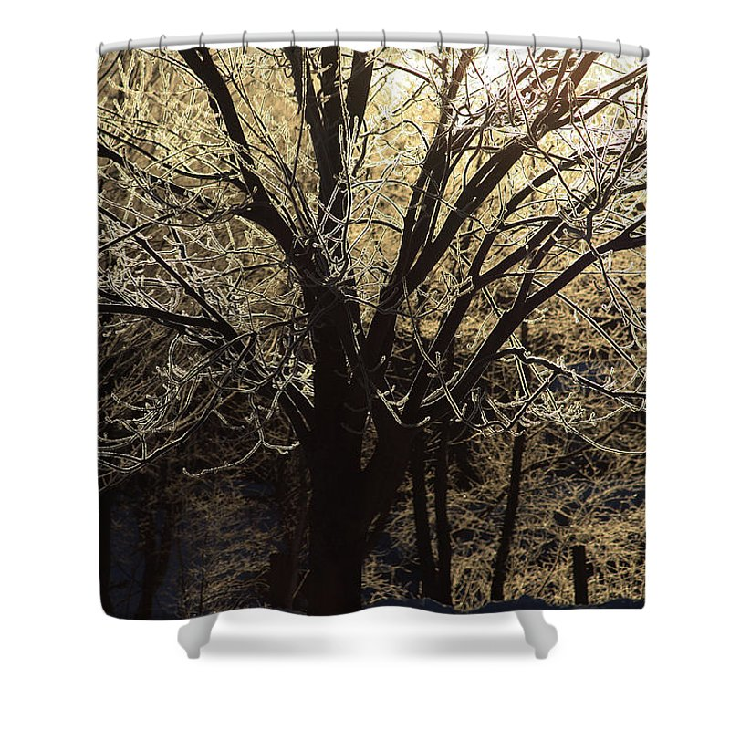 Frozen Shower Curtain featuring the photograph Iced by Karol Livote
