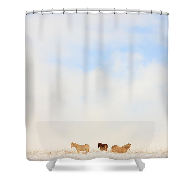 Light Shower Curtain featuring the photograph Icelandic Horses In Snow Covered Field by Robert Postma