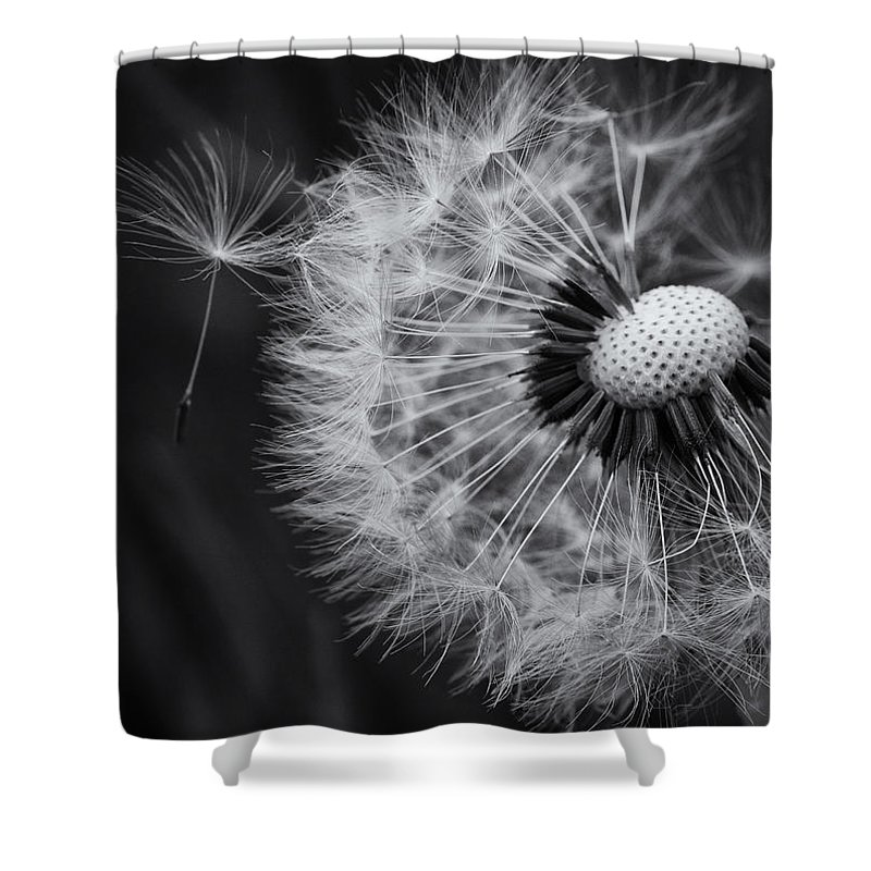 Dandelion Shower Curtain featuring the photograph If Only Wishes Came True by Susan Capuano