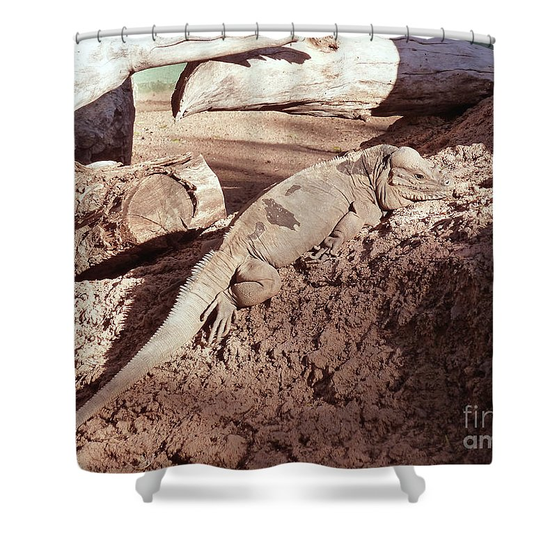 Iguana In The Sun Shower Curtain featuring the photograph Iguana In The Sun by Methune Hively