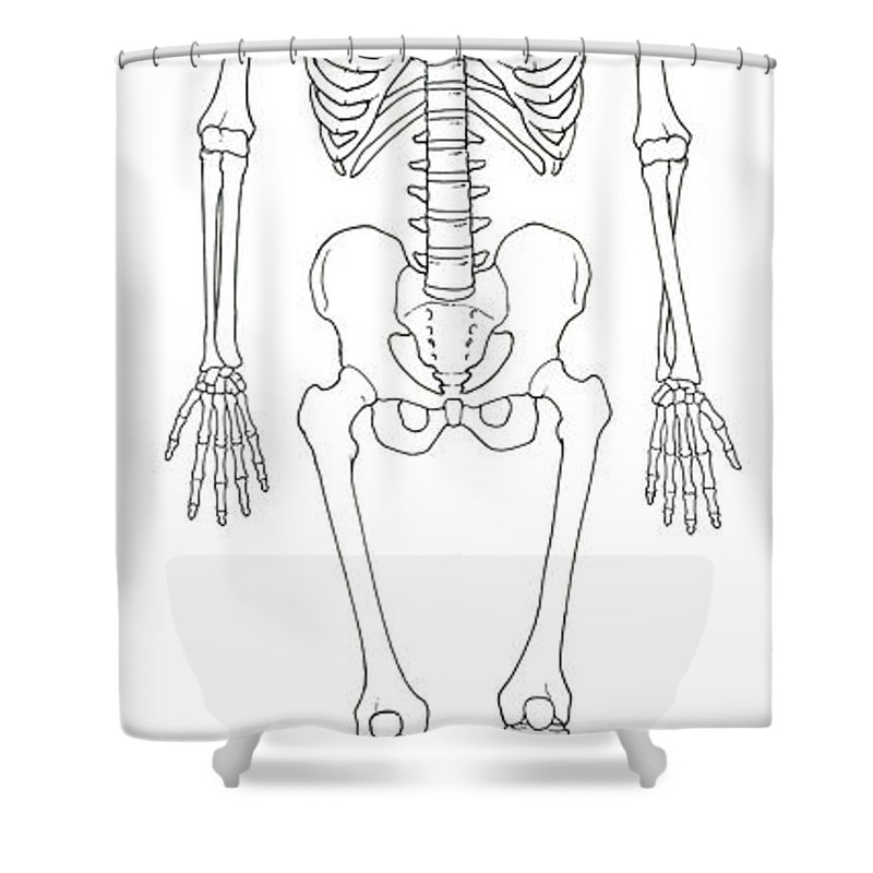 Anatomy Shower Curtain Featuring The Photograph Illustration Of Human Skeleton By Science Source