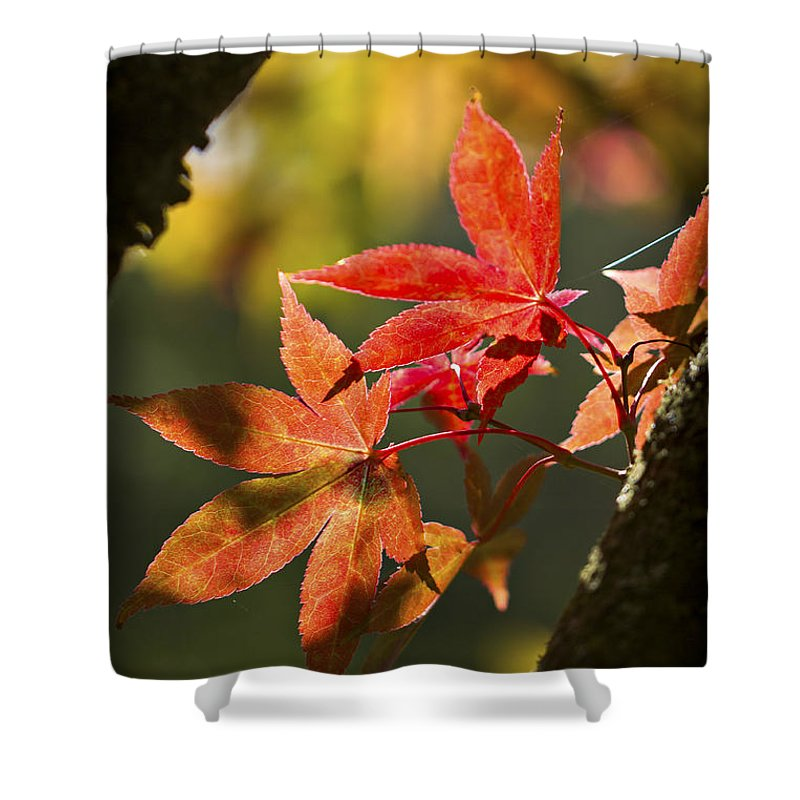 Red Shower Curtain featuring the photograph In Between... by Clare Bambers