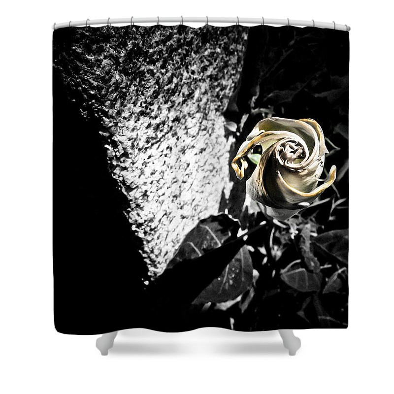 Flower Shower Curtain featuring the photograph In Harmony by Jessica Brawley