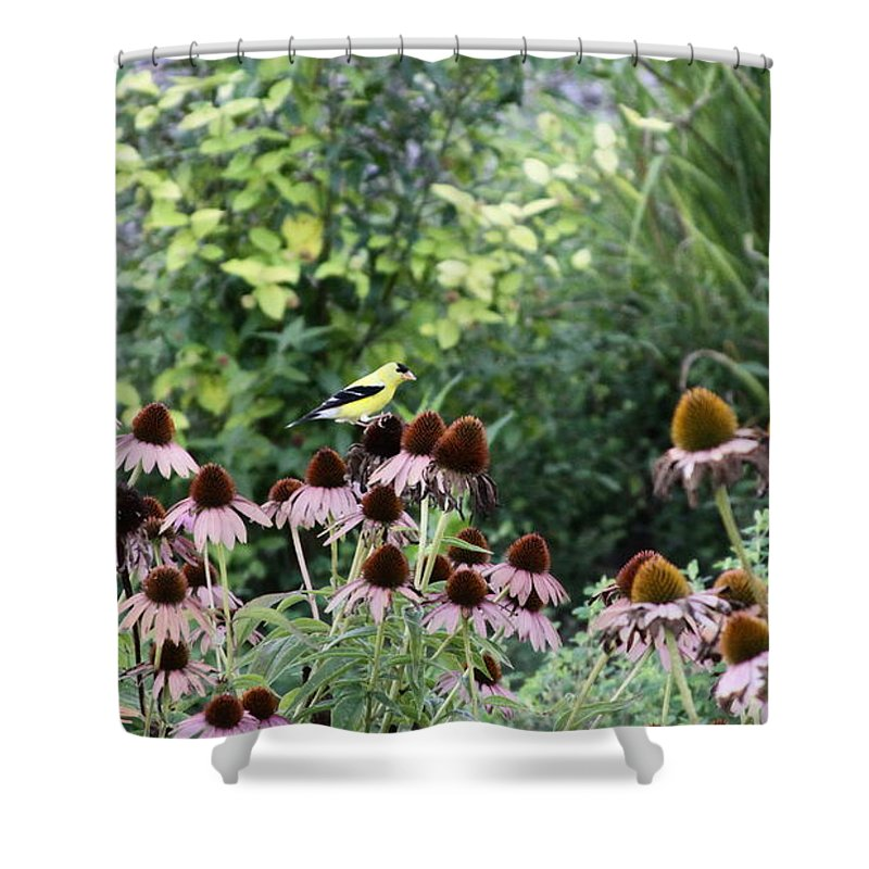 Goldfinch Shower Curtain featuring the photograph In The Garden by Travis Truelove