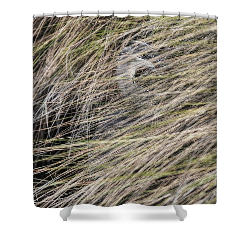 Heron Shower Curtain featuring the photograph In The Grass by Deborah Benoit