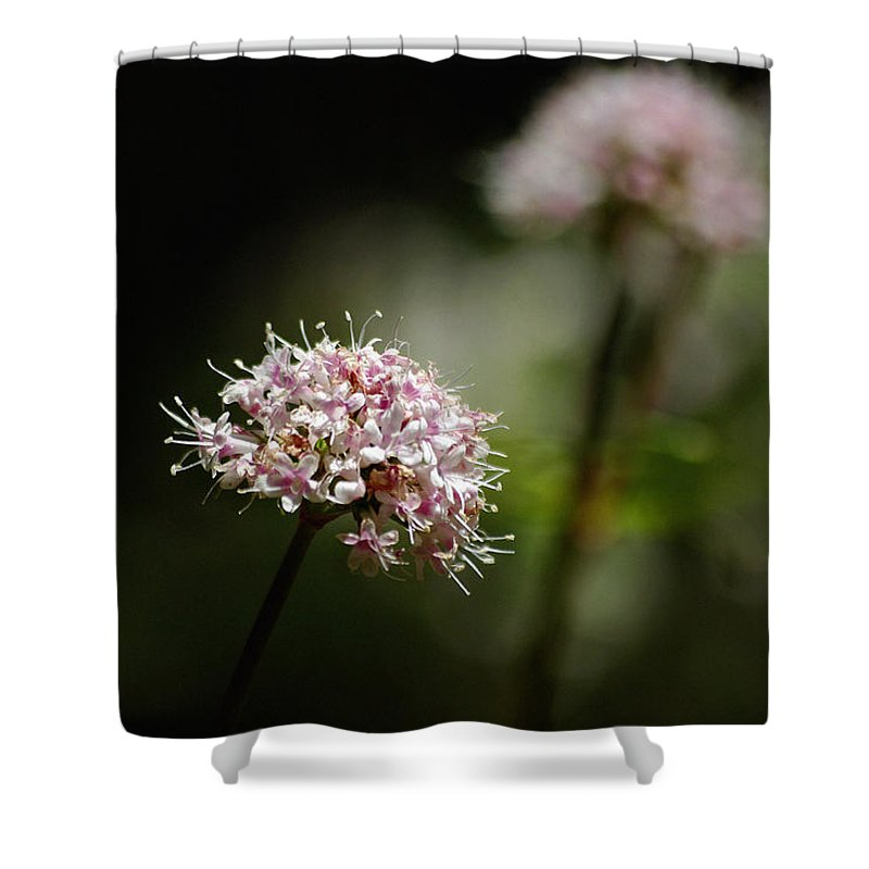 Photograph Shower Curtain featuring the photograph In The Quiet Of The Morning by Vicki Pelham