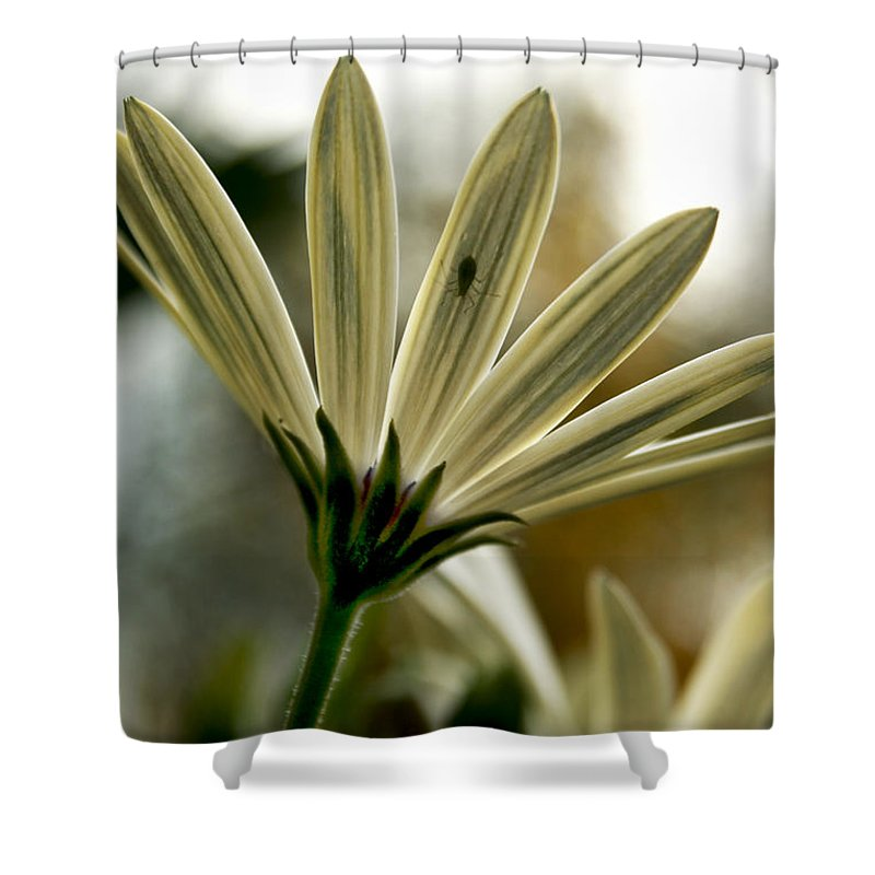 Daisy Shower Curtain featuring the photograph Inner Glow by Heather Applegate
