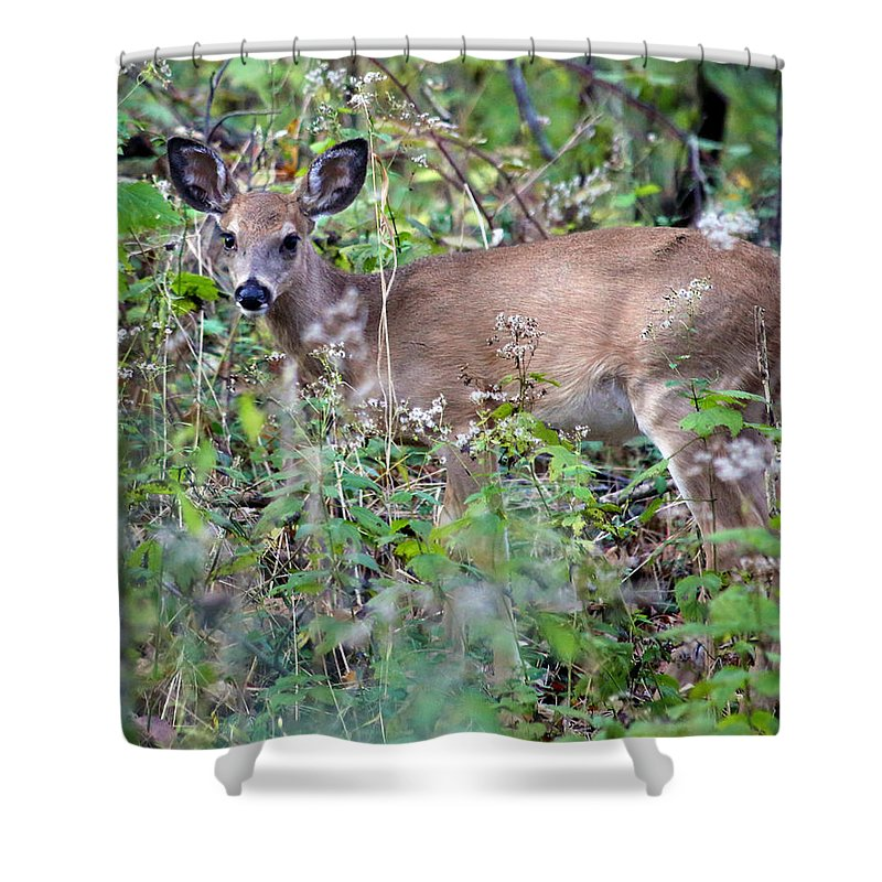 Nature Shower Curtain featuring the photograph Innocence by Mitch Cat