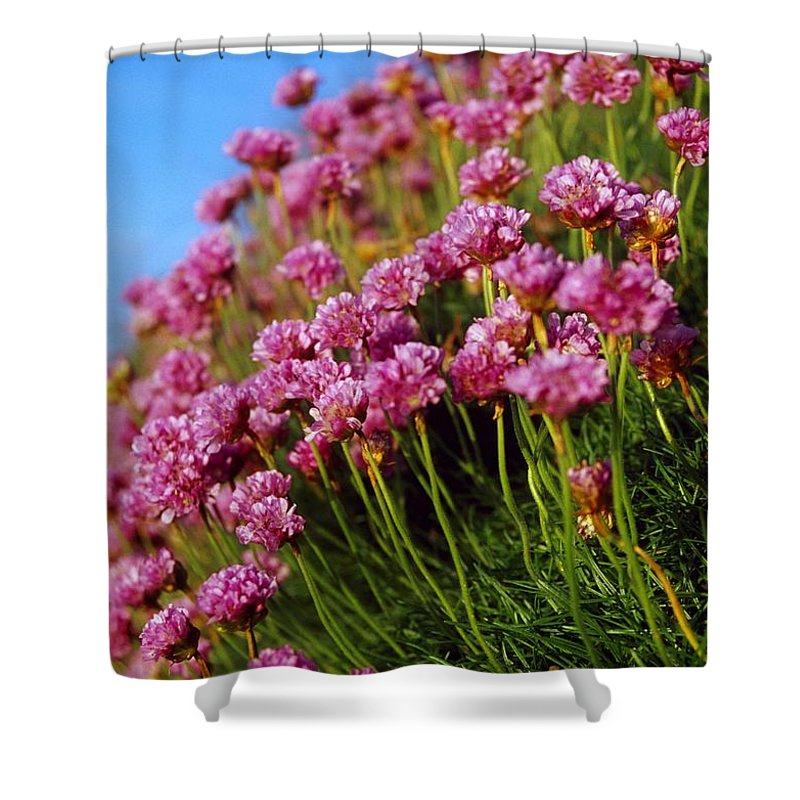 Close-up Shower Curtain featuring the photograph Ireland Close-up Of Seapink Wildflowers by Gareth McCormack