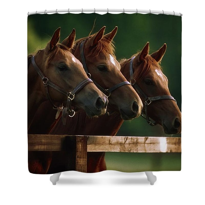 Day Shower Curtain featuring the photograph Ireland Thoroughbred Horses by The Irish Image Collection
