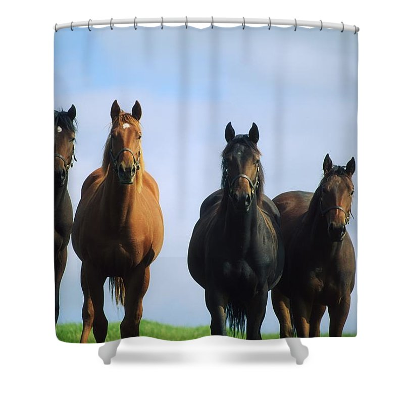 Blue Sky Shower Curtain featuring the photograph Ireland Thoroughbred Yearlings by The Irish Image Collection
