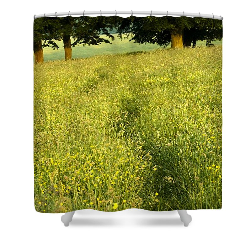 Day Shower Curtain featuring the photograph Ireland Trail Through Buttercup Meadow by Peter McCabe