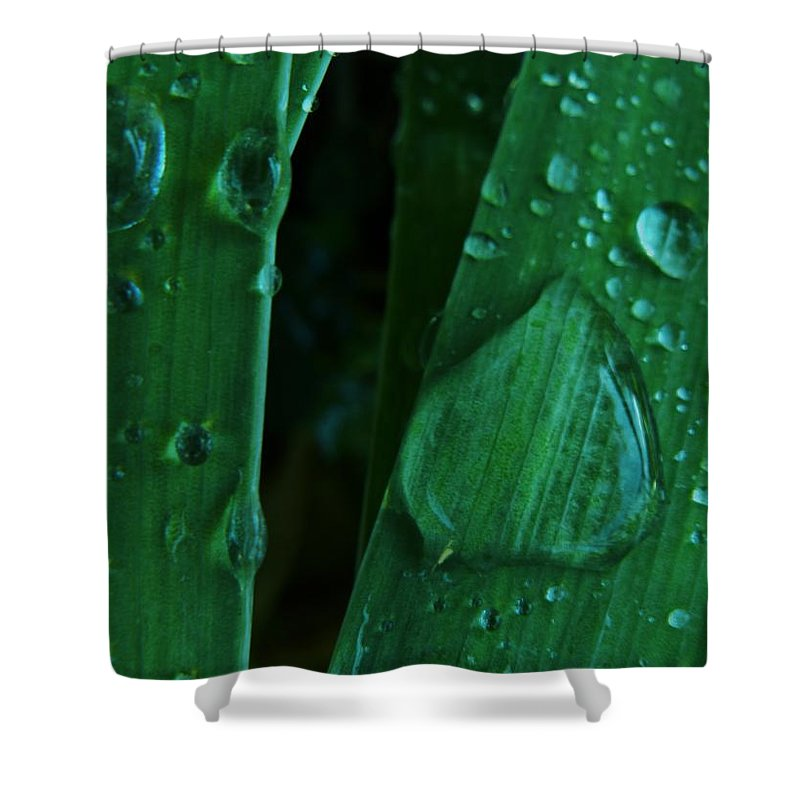 Iris Shower Curtain featuring the photograph Iris Drops by Barbara St Jean